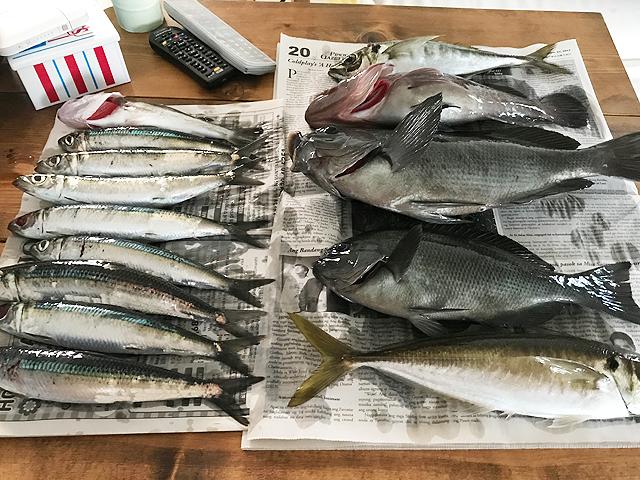 並べた魚たち