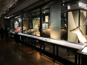 国立科学博物館 日本館 展示室